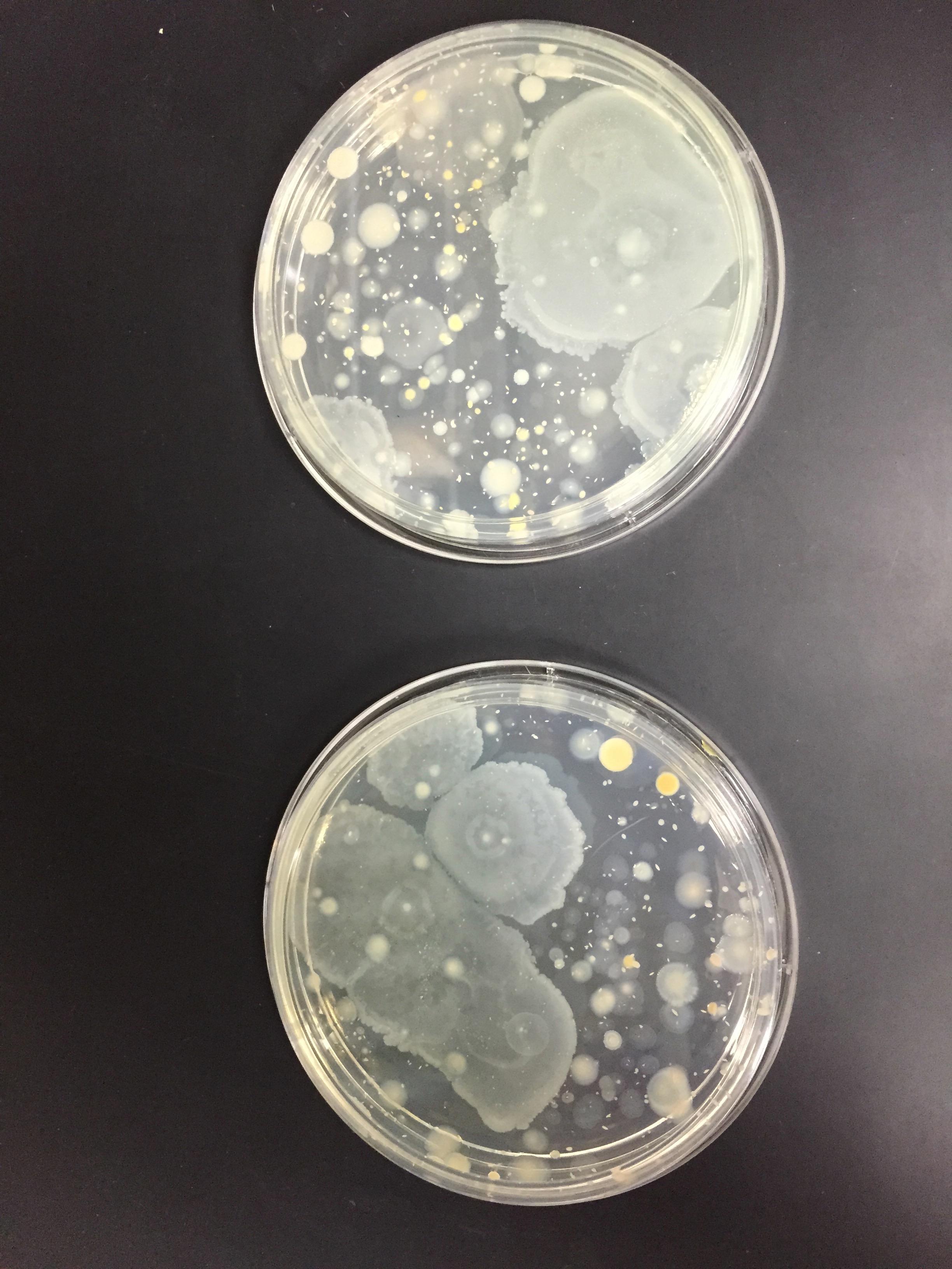 Lab Services Cotey Chemical